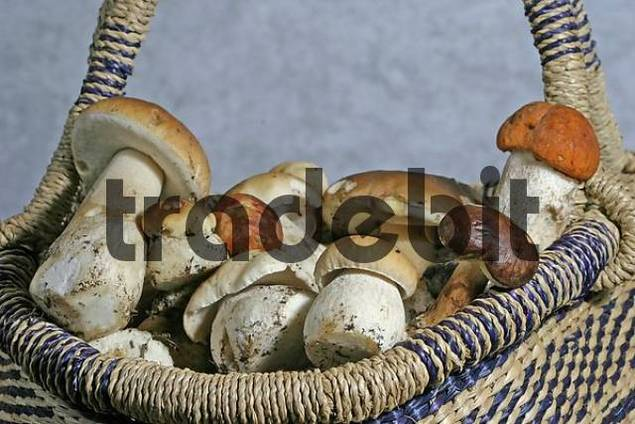 Fresh collected mushrooms in a basket