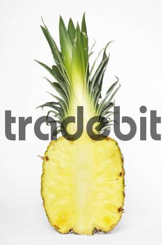 Pineapple Ananas comosus, cut-open