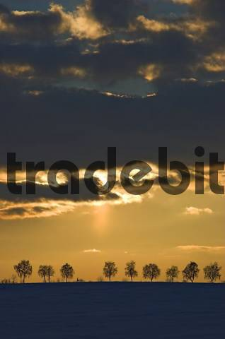 Back-lit row of trees at sunset, Germany