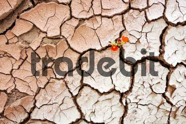 Dried-up riverbed, Grand Staircase National Monument, Utah, USA
