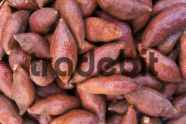 Salak Fruit or Snake Fruit Salacca zalacca