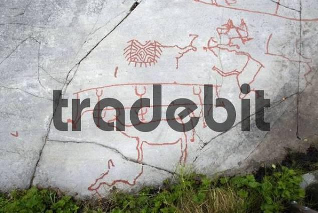 Reindeer, Alta rock carvings, UNESCO World Heritage Site, Alta, Norway, Scandinavia