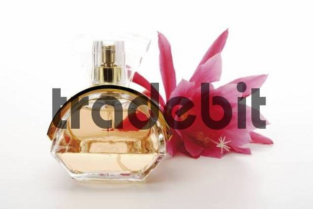 Cactus blossom beside a bottle of perfume
