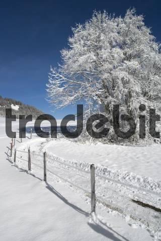 Schwarzsee Pre-Alps, Kaiseregg, Freiburg Canton, Switzerland