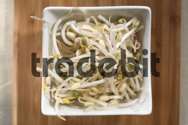 Bean sprouts, soy sprouts in a small bowl