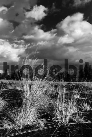 Dramatic clouds forming over a former peat bog, Bavarian wetlands near Nicklheim, Bavaria, Germany, Europe