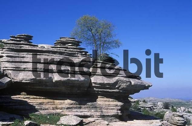 El Torcal de Antequera Nature Reserve, Mlaga Province, Andalusia, Spain