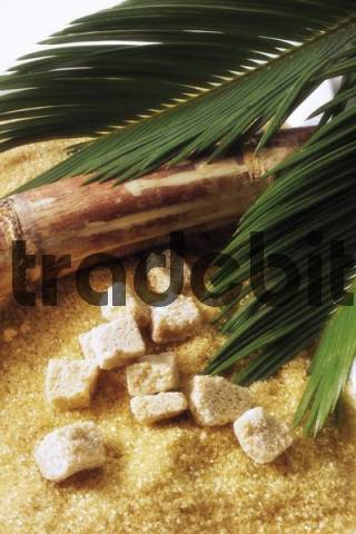 Brown cane sugar Saccharum and a palm frond