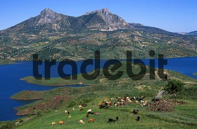 Embalse de Zahara, reservoir in the Sierra de Grazalema, Cdiz Province, Andalusia, Spain