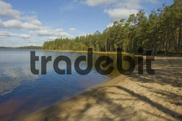 Pine forest, lake, sandy beach, Tiiliikajaervi National Park, Finland, Scandinavia