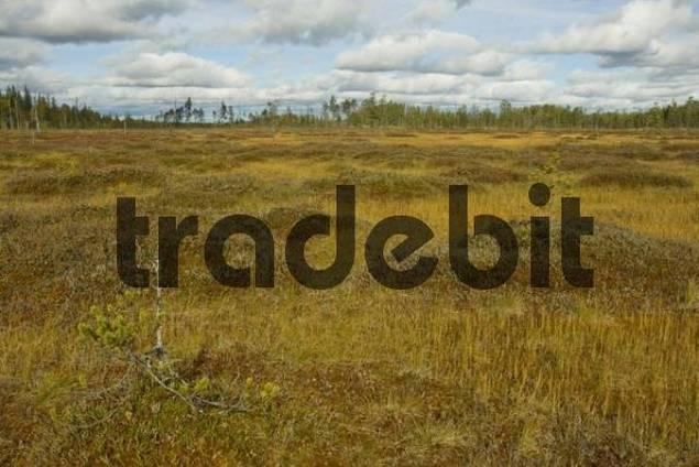 Apa Moor, Lakkapolku, Patvinsuo National Park, Finland, Scandinavia