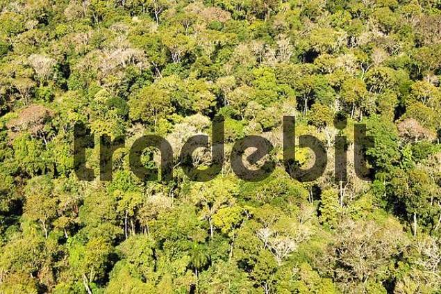 Above the rainforest aerial view Brazil