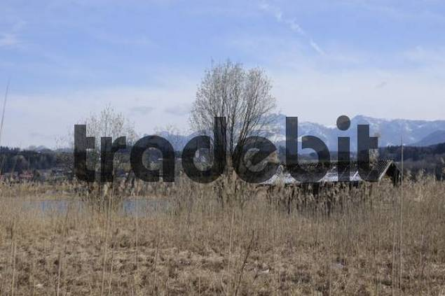 Fishermans hut and reeds on the shore of Lake Simssee in March, village of Neukirchen and Mt. Kampenwand at back, Rosenheim County, Upper Bavaria, Germany, Europe