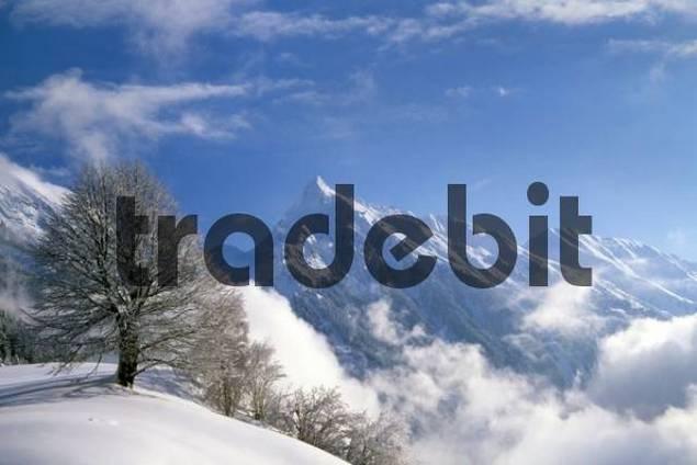 Mt. Brandberg, Zillertal, Tirol, Austria