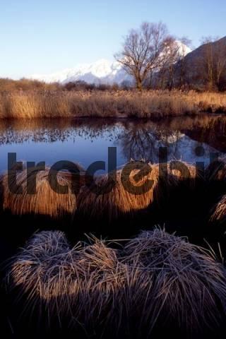 Marshy pond, Gaisau Inzing, Tyrol, Austria, Europe