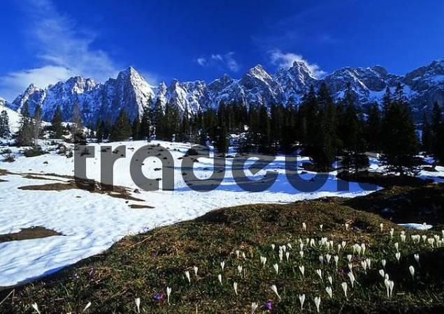 Ladiz, Laliderer-Waende rock face, Karwendel Range, Tirol, Austria