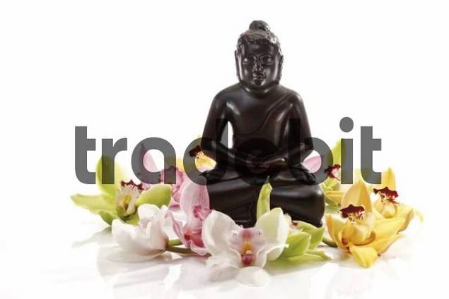 Multicoloured orchid blossoms Orchidaceae in front of a black Buddha statue