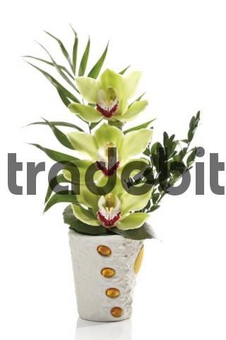 Floral arrangement, green orchids Orchidaceae in a white flowerpot
