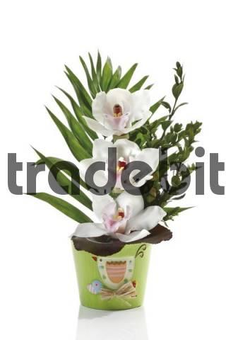 Floral arrangement, white orchids Orchidaceae in a green flowerpot