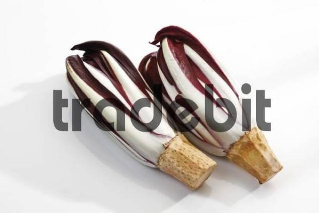 Radicchio, Italian Chicory Cichorium intybus var. foliosum
