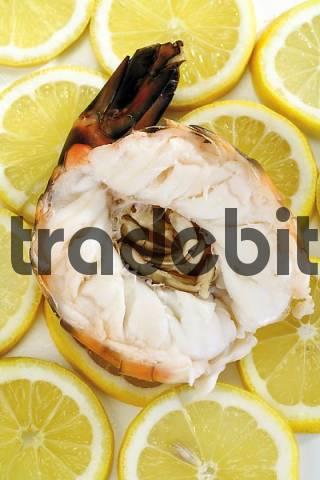 Cooked, halved shrimp on lemon slices