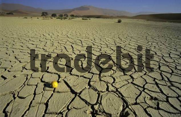 Soil structure of the dried out Namib Desert, Namibia, Africa