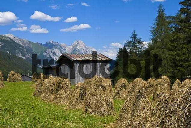 Drying hay and hay barn, Mt. Freispitze at back, near ...