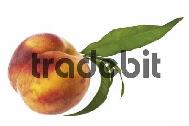 Fresh peach Prunus persica, green leaf still attached