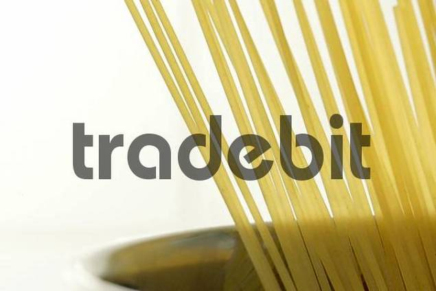 Spaghetti to cook in a pot