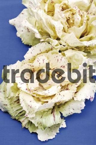 Radicchio Variegato di Castelfranco variegated chicory