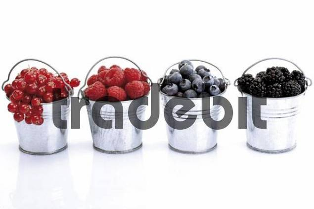 Four small galvanized buckets containing left to right red currants, raspberries, blueberries and blackberries