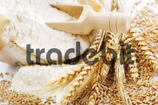 Flour in a sack, wooden measuring spoon, ears of dried wheat and loose wheat grains