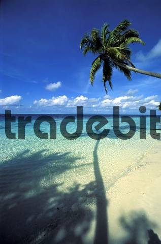 palm tree looms into the water