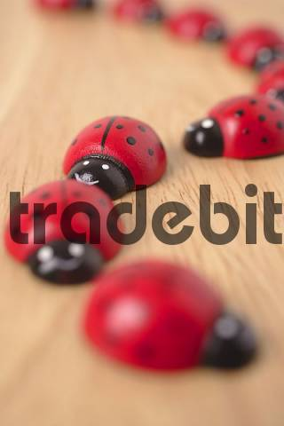Ladybugs on wooden Table