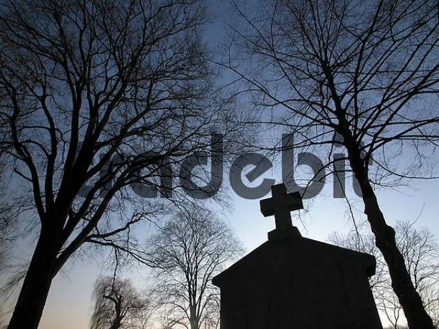trees at the evening on a graveyard