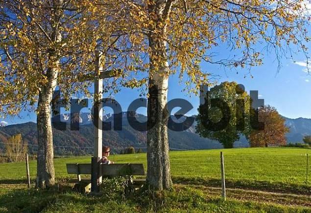 Cross at a way under autumn Birch trees, Walker is sitting on a bench, Roßhaupten, Allgäu, East Allgäu, Bavaria, Germany, BRD, Europe,