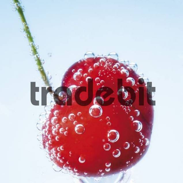 Cherry frozen in a block of ice