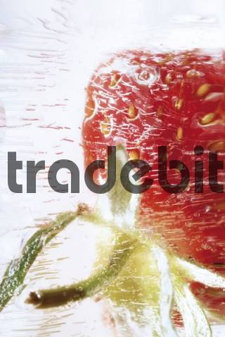 Strawberry frozen in a block of ice