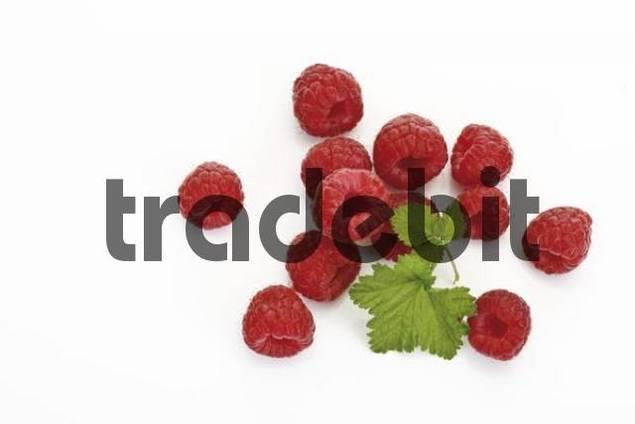 European Red Raspberries Rubus idaeus