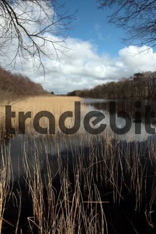 Prerowstrom Stream in the Darsswald, Darss Forest, Prerow estuary, Prerow on Darss, Mecklenburg-Western Pomerania, Germany, Europe