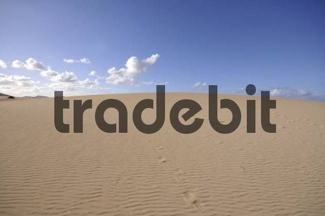 Shifting dune, sand ripples, Corralejo National Park, Fuerteventura, Canary Islands, Spain, Europe