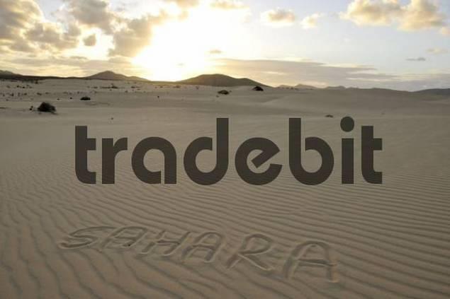 Sahara written in the sand, dune, backlit, evening, Corralejo National Park, Fuerteventura, Canary Islands, Spain, Europe
