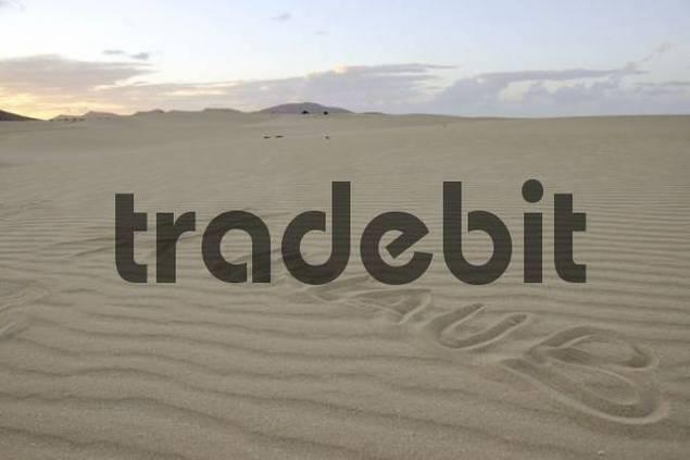 Fuerte 2008 written in the sand, dune, backlit, evening, Corralejo National Park, Fuerteventura, Canary Islands, Spain, Europe