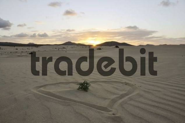 Heart drawn in the sand, dune, backlit, evening, Corralejo National Park, Fuerteventura, Canary Islands, Spain, Europe