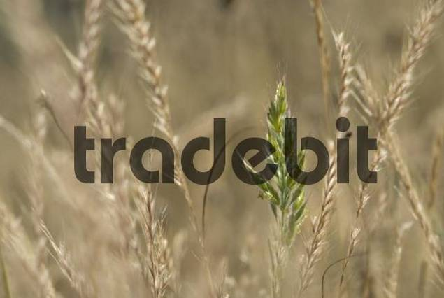 Grasses, Grasse, Alpes Maritimes, France, Europe