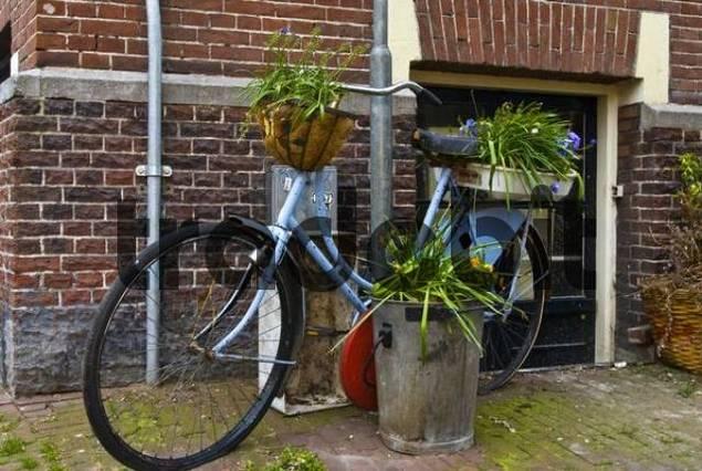 stillleben altes fahrad mit blumen amsterdam holland niederland. Black Bedroom Furniture Sets. Home Design Ideas