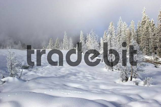 chilly winter landscape in Yellowstone National park
