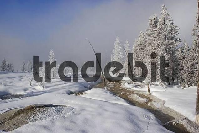 magic winter wonderland in Yellowstone National park