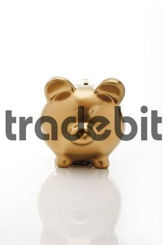 Gold coloured piggy bank