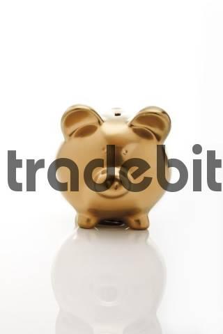Gold coloured piggy bank